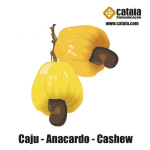 Caju - Anacardo - Cashew